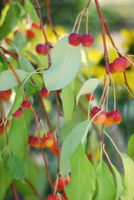 Aldenberriesforblog