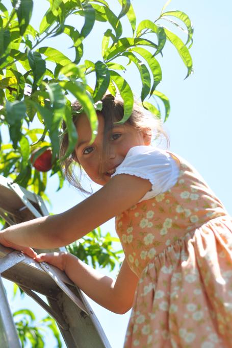 Eallaonfruitladder