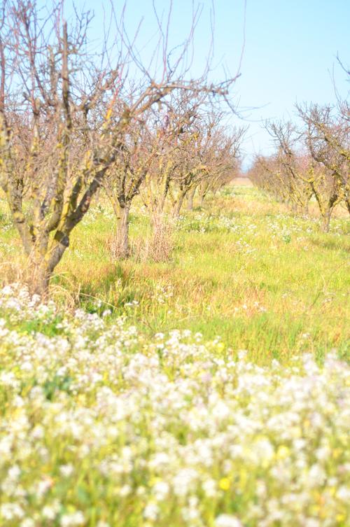 Winterorchard