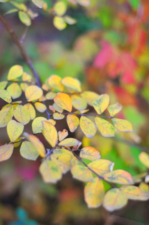Yellowleaves