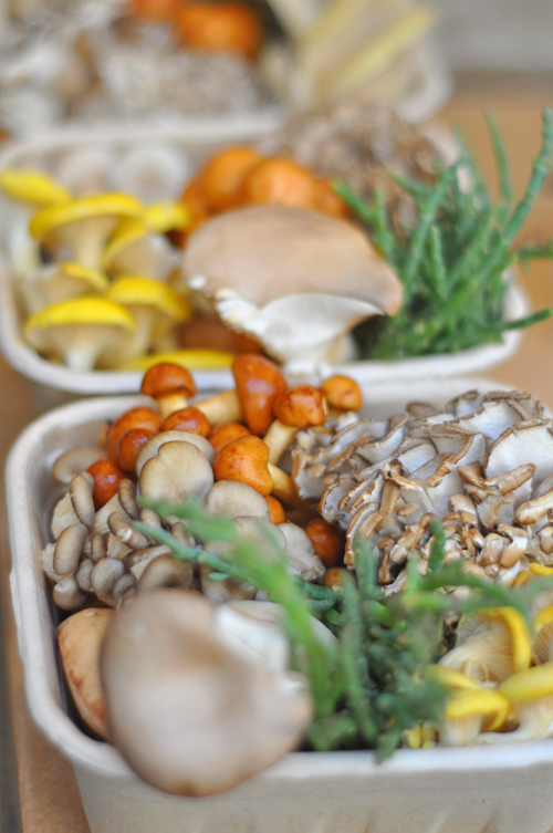 Mushroomcloseup
