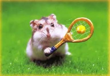 Hamstertenniss
